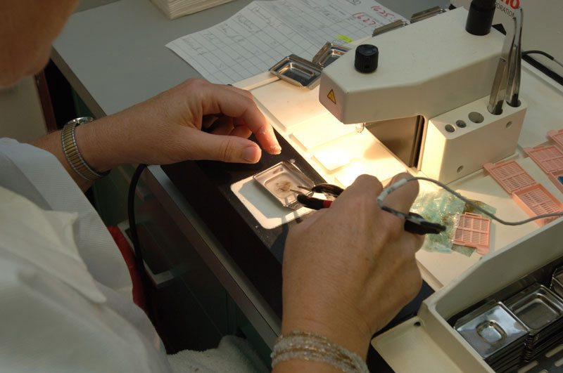 Paraffin Processing of Tissue | Protocols Online